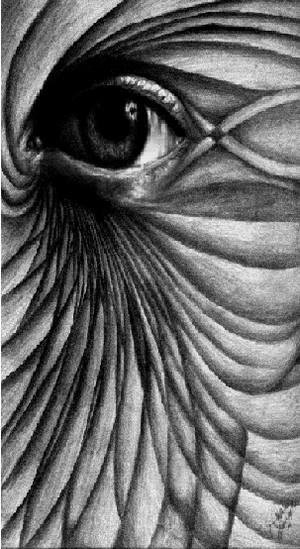 Gözlerine Bakmak