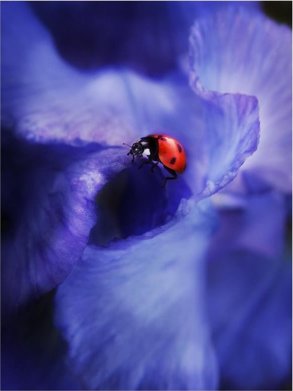 Uğur Böceği ve Dalgalar