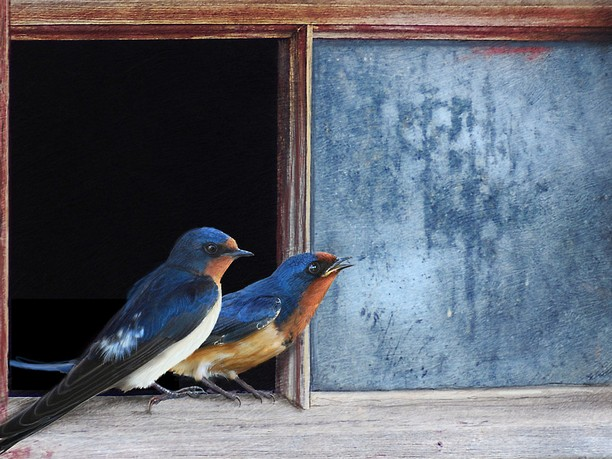 Penceremdeki Mavi Kuşlar
