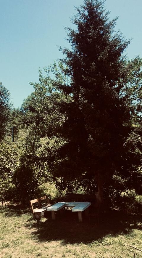 Bu Ağaç İkimizin